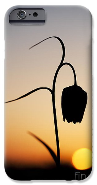 Meleagris iPhone Cases - Fritillary Sunset iPhone Case by Tim Gainey