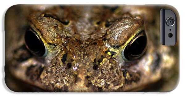 Invertebrates Mixed Media iPhone Cases - Frog 2 iPhone Case by Optical Playground By MP Ray
