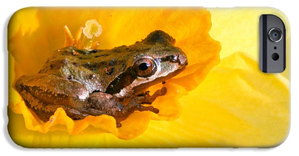 Jeannoren iPhone Cases - Frog and daffodil iPhone Case by Jean Noren
