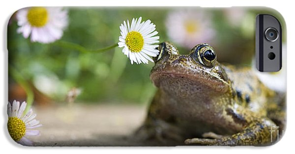 Fauna iPhone Cases - Frog and the Daisy  iPhone Case by Tim Gainey