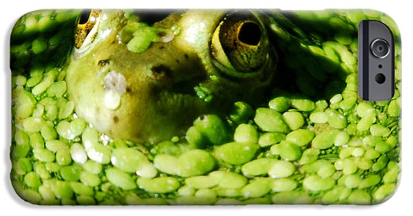 Invertebrates Mixed Media iPhone Cases - Frog eyes iPhone Case by Optical Playground By MP Ray