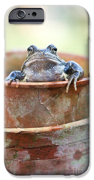 Flowerpot iPhone Cases - Frog in a Pot iPhone Case by Tim Gainey
