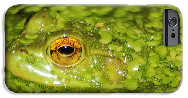 Invertebrates Mixed Media iPhone Cases - Frog in single celled algae iPhone Case by Optical Playground By MP Ray