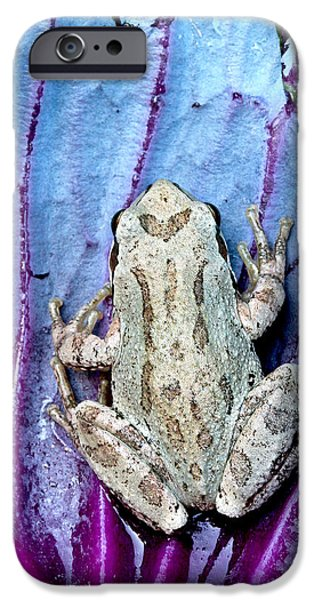 Jeannoren iPhone Cases - Frog on cabbage iPhone Case by Jean Noren