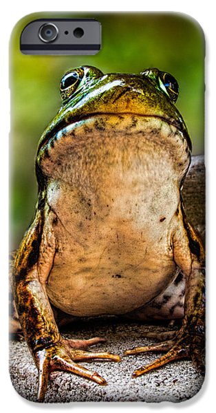 Collects iPhone Cases - Frog Prince or so he thinks iPhone Case by Bob Orsillo