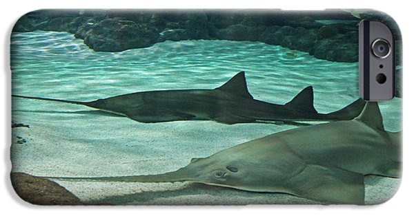 Shark iPhone Cases - From the Deep - Sawtooth Ray Sharks iPhone Case by Suzanne Gaff