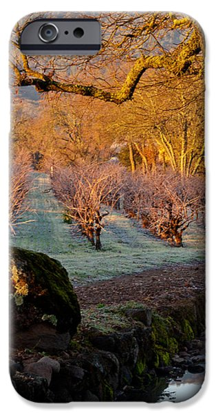 Oak Creek iPhone Cases - Frost in the Valley Of the Moon iPhone Case by Bill Gallagher