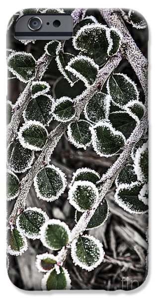 Frost Photographs iPhone Cases - Frost on plant branch in late fall iPhone Case by Elena Elisseeva