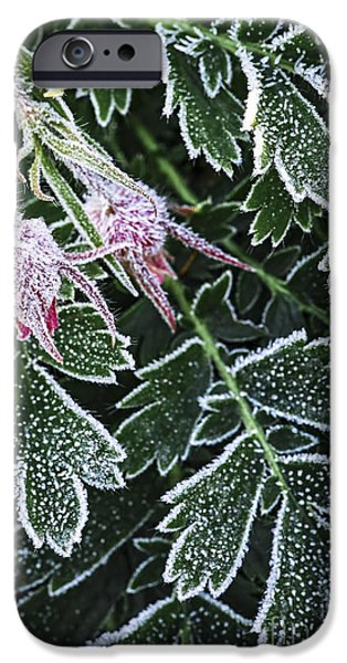 Botanical Photographs iPhone Cases - Frost on plants in late fall iPhone Case by Elena Elisseeva