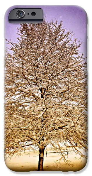 Frosted Branches iPhone Case by Marty Koch