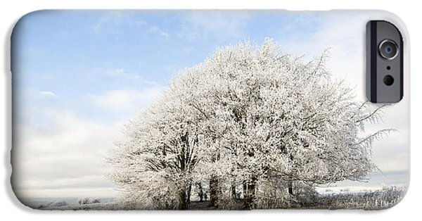 Wintertime iPhone Cases - Frosted Copse iPhone Case by Anne Gilbert