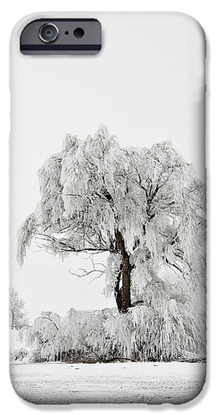 Wintertime iPhone Cases - Frosted iPhone Case by Mary Jo Allen