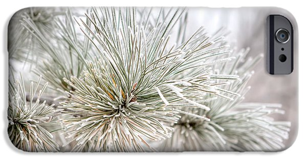 Pines iPhone Cases - Frosted Pine Needles iPhone Case by James O Thompson