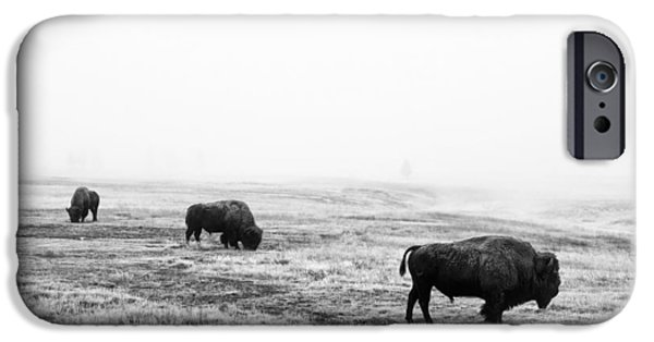 Bison Photographs iPhone Cases - Frosty Bison iPhone Case by Mark Kiver