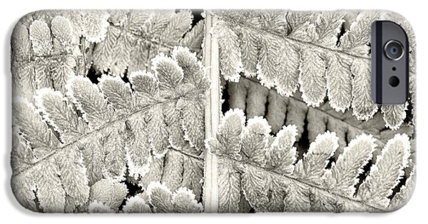 Close iPhone Cases - Frosty Fern iPhone Case by Janet Burdon