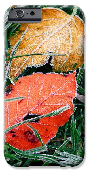 Winter Mornings iPhone Cases - Frosty leaves iPhone Case by Elena Elisseeva