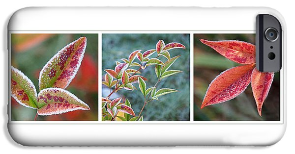 Interior Scene iPhone Cases - Frosty Leaves iPhone Case by Gill Billington