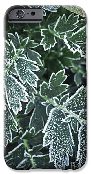 Botanical Photographs iPhone Cases - Frosty leaves in late fall iPhone Case by Elena Elisseeva