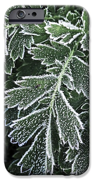 Frost Photographs iPhone Cases - Frosty leaves macro iPhone Case by Elena Elisseeva