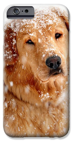 Cute Puppy iPhone Cases - Frosty Mug iPhone Case by Christina Rollo