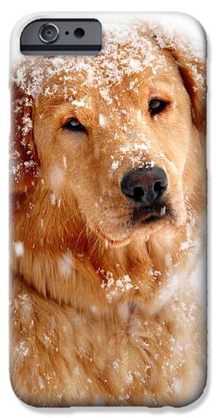 Christmas Greeting iPhone Cases - Frosty Mug iPhone Case by Christina Rollo