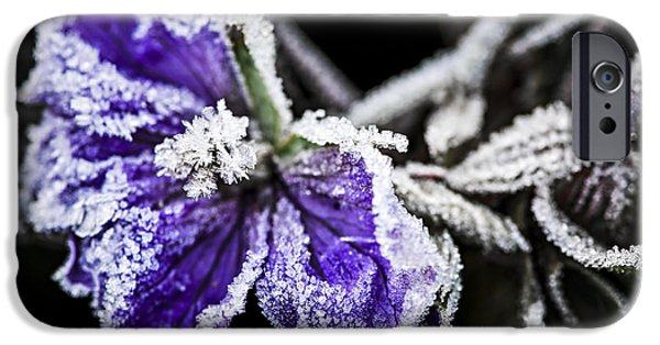 Frost Photographs iPhone Cases - Frosty purple flower in late fall iPhone Case by Elena Elisseeva