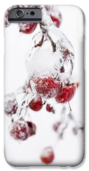 Winter Storm iPhone Cases - Frozen crab apples iPhone Case by Elena Elisseeva