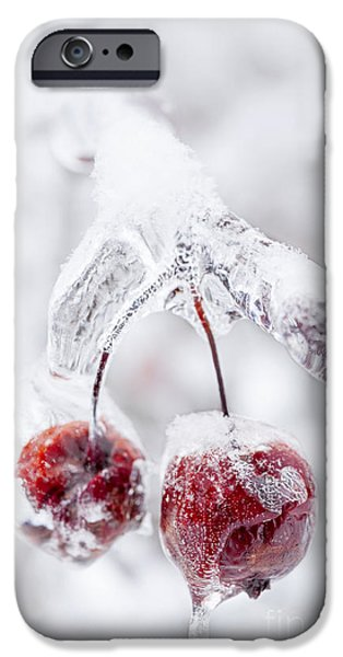 Winter Storm iPhone Cases - Frozen crab apples on icy branch iPhone Case by Elena Elisseeva