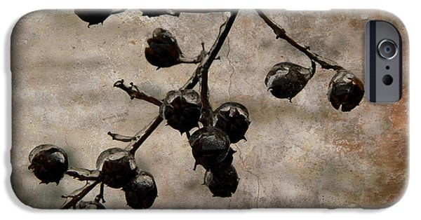 Winter Storm iPhone Cases - Frozen Crepe Myrtle Pods iPhone Case by Kathy Barney