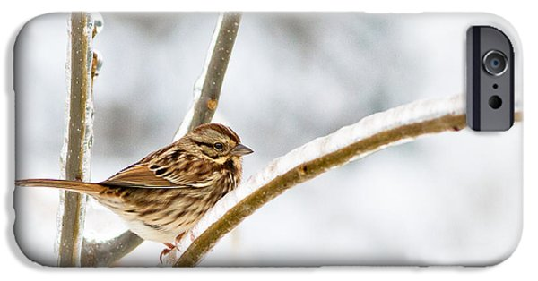 Birds On Limbs iPhone Cases - Frozen In Time iPhone Case by Annette Hugen