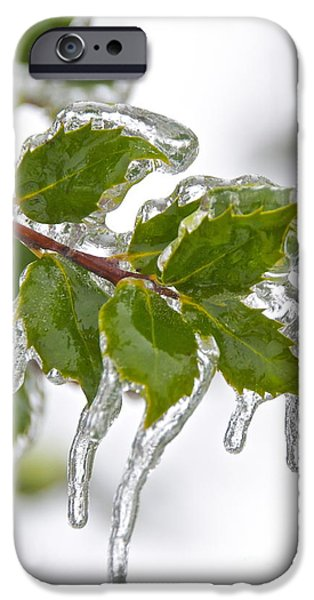 Winter Storm iPhone Cases - Frozen Leaves iPhone Case by Sean Griffin