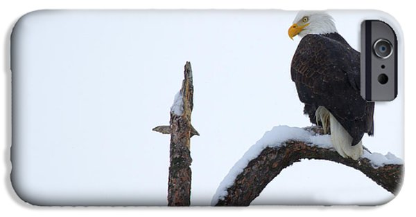 Eagle Photographs iPhone Cases - Frozen Perch iPhone Case by Mike  Dawson
