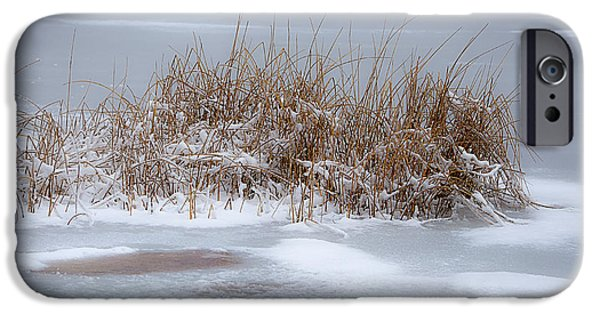 Snow Scene iPhone Cases - Frozen Reeds iPhone Case by Julie Palencia