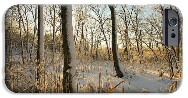 Indiana Landscapes iPhone Cases - Frozen Swamp at Golden Hour iPhone Case by Jackie Novak