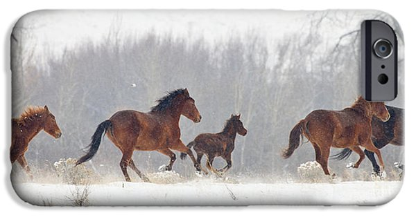 Mustang Horse iPhone Cases - Frozen Track iPhone Case by Mike  Dawson
