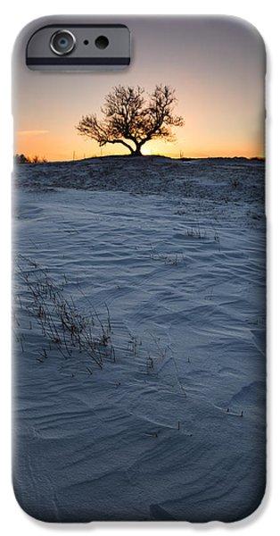 Lone Tree iPhone Cases - Frozen Tree of Wisdom iPhone Case by Aaron J Groen