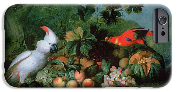 Cockatoo iPhone Cases - Fruit And Birds iPhone Case by Jakob Bogdani or Bogdany