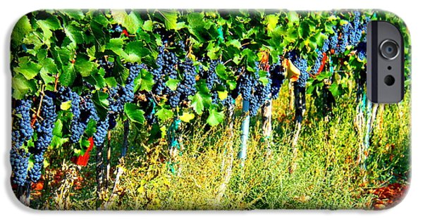 Windy Point Winery iPhone Cases - Fruit of the Vine iPhone Case by Kay Gilley