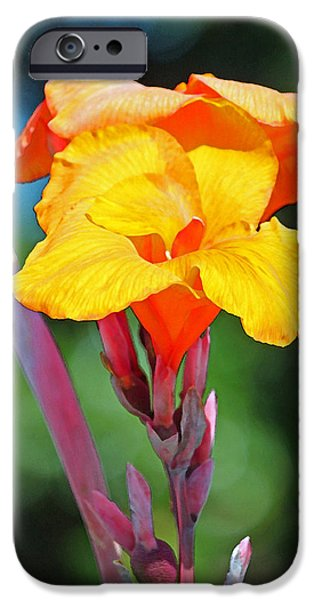 Canna iPhone Cases - Fruit Sherbet iPhone Case by Suzanne Gaff