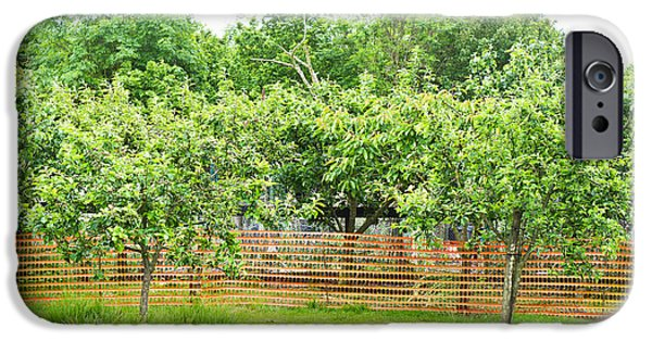 Agricultural Photographs iPhone Cases - Fruit trees iPhone Case by Tom Gowanlock