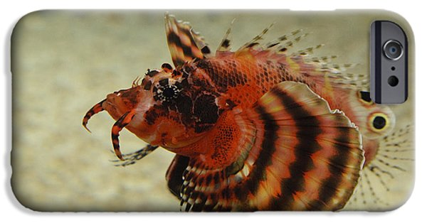 Underwater Photos iPhone Cases - Fu Manchu Lionfish iPhone Case by John Shaw