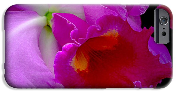 Pinks And Purple Petals iPhone Cases - Fuchsia Cattleya Orchid Squared iPhone Case by Julie Palencia