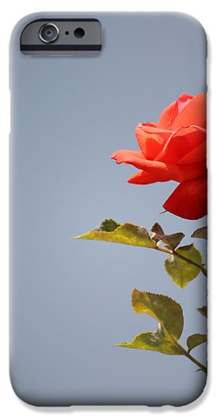 Petal iPhone Cases - Full of Grace iPhone Case by  The Art Of Marilyn Ridoutt-Greene