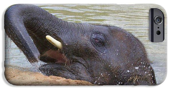 Elephants iPhone Cases - Fun in the sun - Asian Elephant iPhone Case by TN Fairey