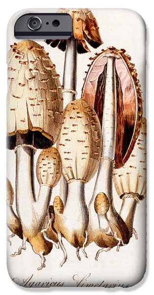 Diagram Paintings iPhone Cases - Fungi iPhone Case by English School