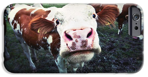 Recently Sold -  - Agriculture iPhone Cases - Funny cow iPhone Case by JR Photography