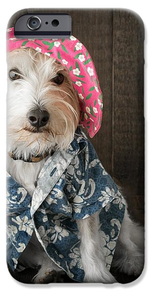 Animal Cards iPhone Cases - Funny Doggie iPhone Case by Edward Fielding