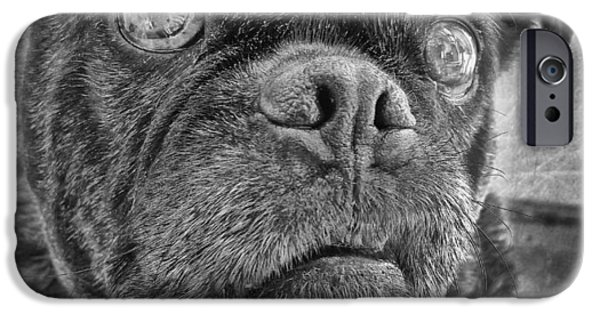 Dog iPhone Cases - Funny Pug iPhone Case by Larry Marshall