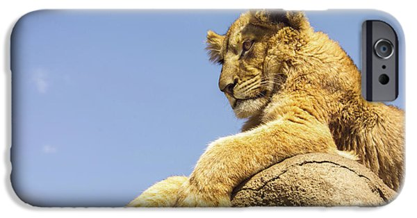 Lion Photographs iPhone Cases - Future King iPhone Case by Diane Diederich