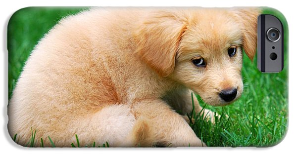 Fuzzy Golden Puppy iPhone Cases - Fuzzy Golden Puppy iPhone Case by Christina Rollo
